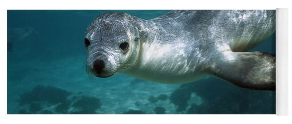 Australian Sea Lion Neophoca Cinerea Yoga Mat