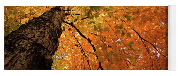 Autumn Canopy In Maine Yoga Mat