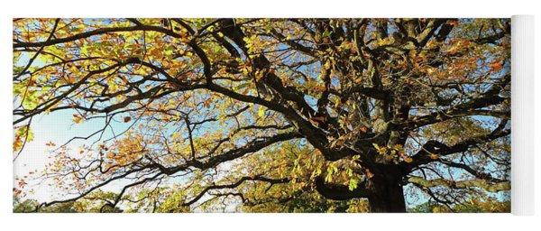 Autumn Colours At Bushy Park London Yoga Mat
