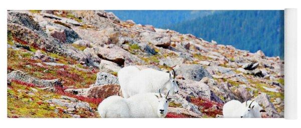 Autumn Goats On Mount Bierstadt Yoga Mat