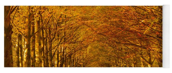 Autumn Lane In An Orange Forest Yoga Mat