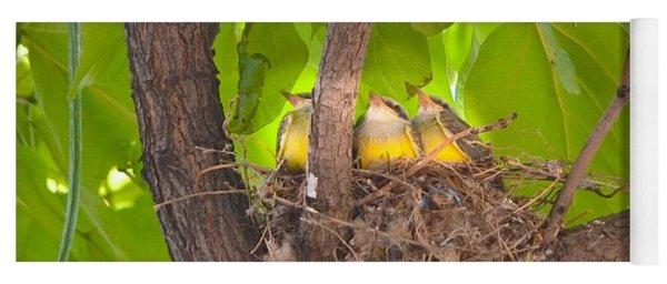 Baby Birds Waiting For Mom Yoga Mat