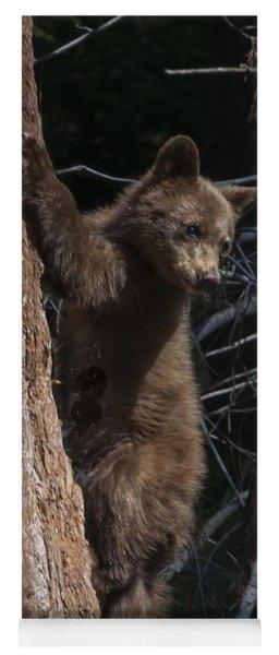 Baby Black Bear In High Sierras Yoga Mat