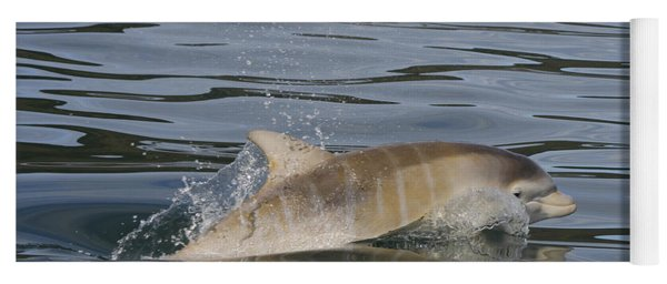 Baby Bottlenose Dolphin - Scotland  #35 Yoga Mat