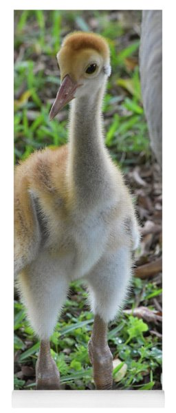 Baby Crane At A Month Old Yoga Mat