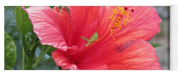 Yoga Mat featuring the photograph Baby Grasshopper On Hibiscus Flower by Nancy Nale