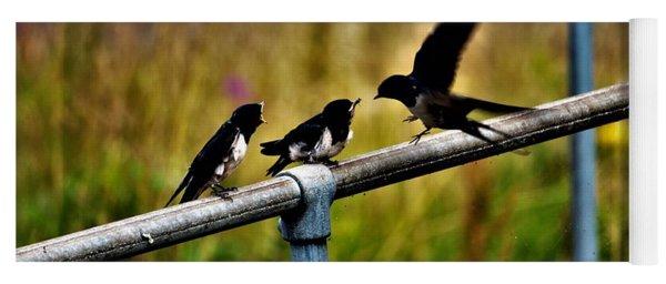 Baby Swallows Feeding Yoga Mat