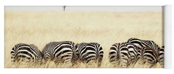 Back View Of Zebras In A Row  Yoga Mat