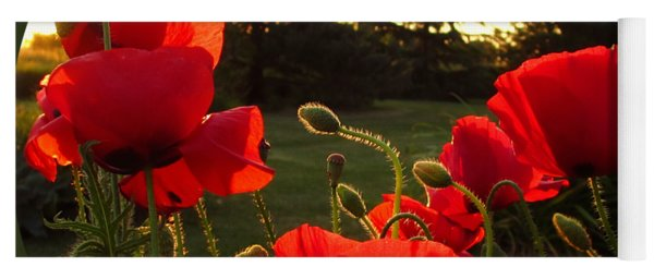 Backlit Red Poppies Yoga Mat