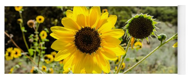 Backlit Sunflower Aka Helianthus Yoga Mat