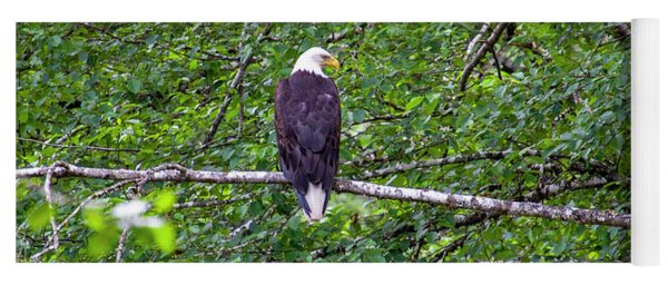 Bald Eagle 1 Yoga Mat