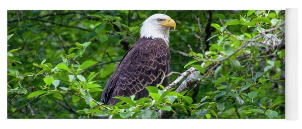 Bald Eagle 2 Yoga Mat