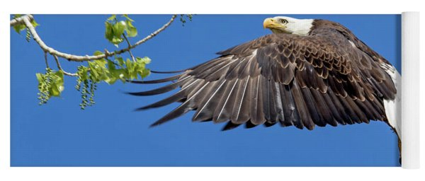 Bald Eagle In Flight 4-25-17 Yoga Mat