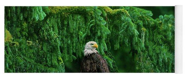 Bald Eagle In Temperate Rainforest Alaska Endangered Species Yoga Mat