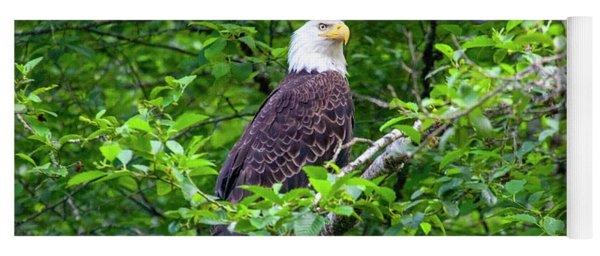 Bald Eagle In Tree Yoga Mat