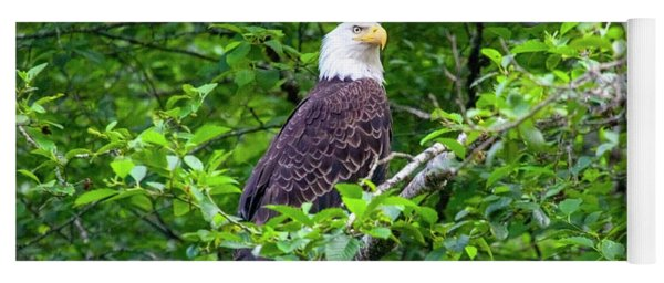 Bald Eagle In Tree Yoga Mat