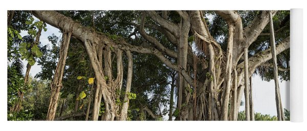 Yoga Mat featuring the photograph Banyan Tree At Bonnet House by Belinda Greb
