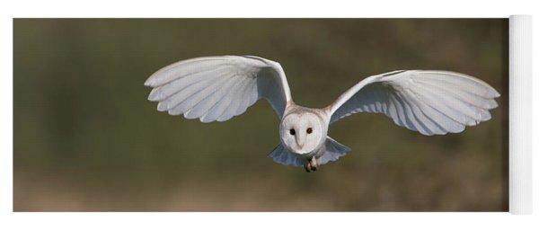 Barn Owl Approaching Yoga Mat
