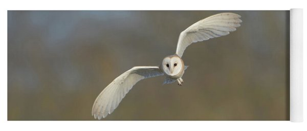 Barn Owl Hunting In Worcestershire Yoga Mat