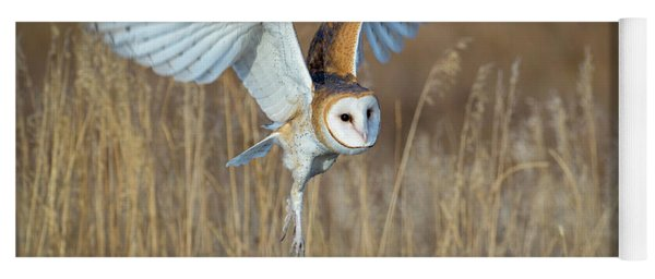 Barn Owl In Grass Yoga Mat