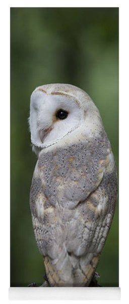 Barn Owl In The Woods 2 Yoga Mat