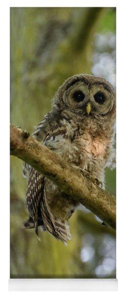 Barred Owl Fledgeling Yoga Mat