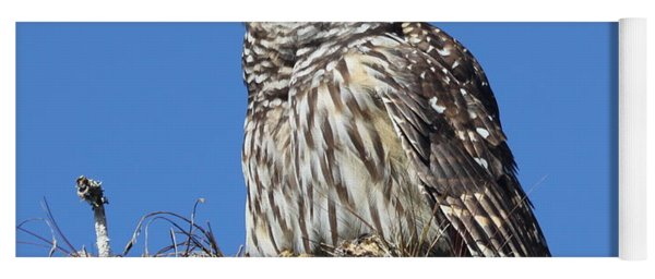 Barred Owl Portrait Yoga Mat