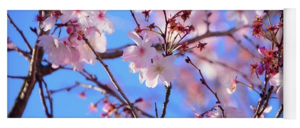 Beautiful Blossoms Blooming  For Spring In Georgia Yoga Mat