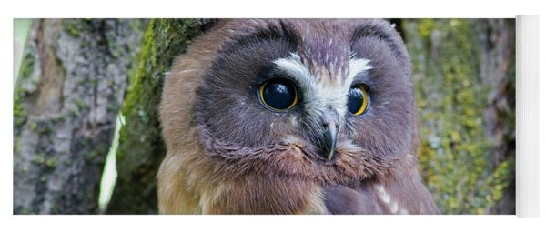 Beautiful Eyes Of A Saw-whet Owl Chick Yoga Mat