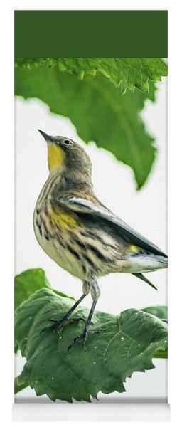 Beautiful Warbler Yoga Mat