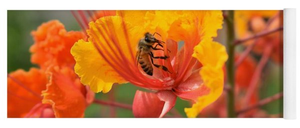 Bee Pollinating Bird Of Paradise Yoga Mat