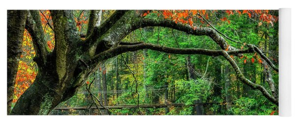 Beech Tree And Swinging Bridge Yoga Mat