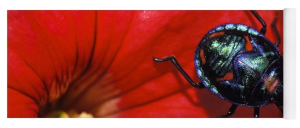 Beetle On A Hibiscus Flower. Yoga Mat