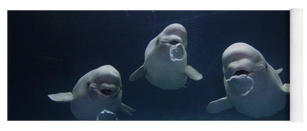 Beluga Delphinapterus Leucas Whale Trio Yoga Mat
