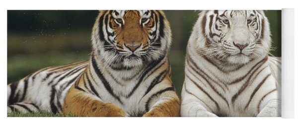 Bengal Tiger Team Yoga Mat