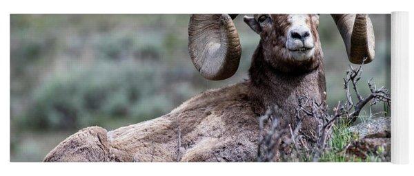 Big Horn Sheep #3 Yoga Mat