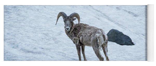Big Horn Sheep  Yoga Mat