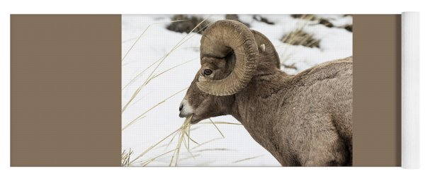 Big Horn Snacking In The Snow Yoga Mat