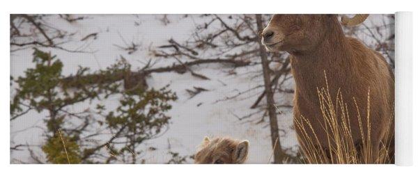 Bighorn Ram And Kid Yoga Mat
