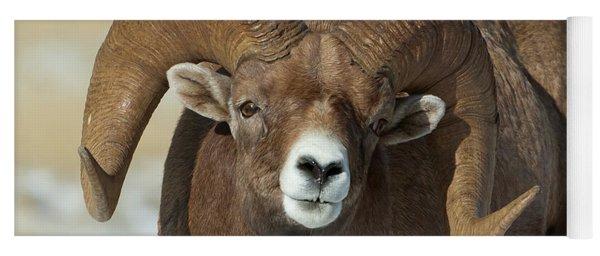 Bighorn Ram In Montana Yoga Mat
