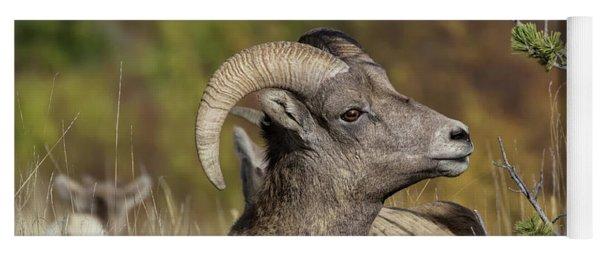 Bighorn Ram Kicking Back Yoga Mat