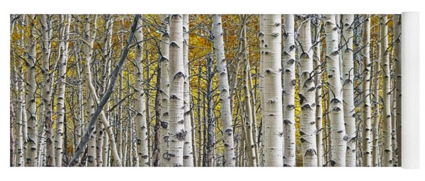 Birch Tree Grove With A Touch Of Yellow Color Yoga Mat