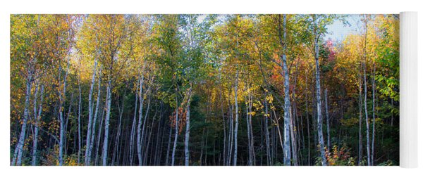 Birch Trees Turn To Gold Yoga Mat