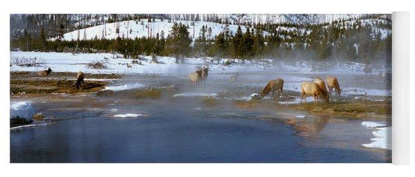 Biscuit Basin Elk Herd Yoga Mat
