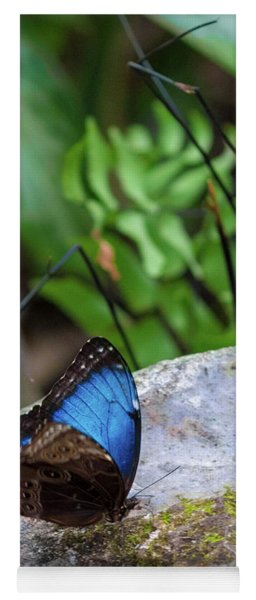 Yoga Mat featuring the photograph Black And Blue Butterfly Eating by Raphael Lopez