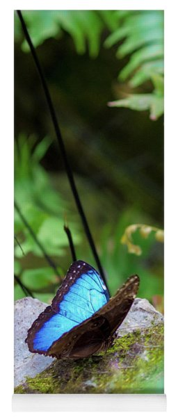 Yoga Mat featuring the photograph Black And Blue Butterfly by Raphael Lopez