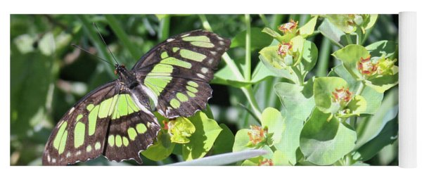 Black And Green Butterfly Yoga Mat