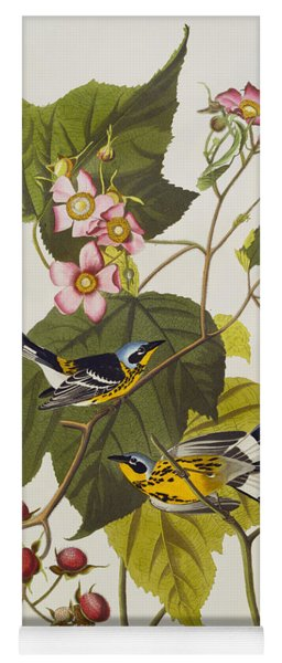 Black And Yellow Warbler Yoga Mat