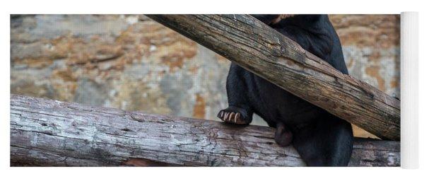 Black Bear Cub Sitting On Tree Trunk Yoga Mat