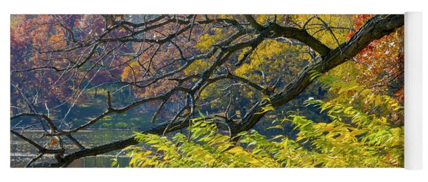 Black Branches Through Bright Autumn Trees Yoga Mat
